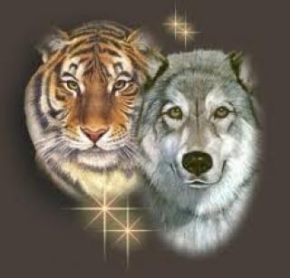 Harimau-dan-Serigala